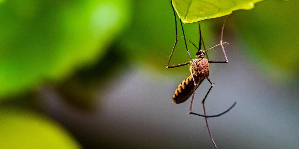 Bästa myggfångare och myggskydd